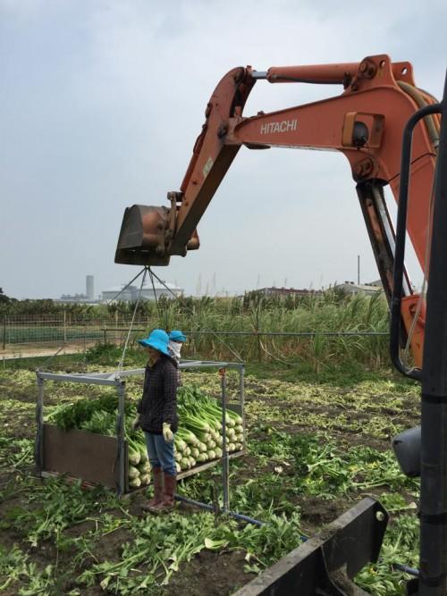 沖縄のお野菜