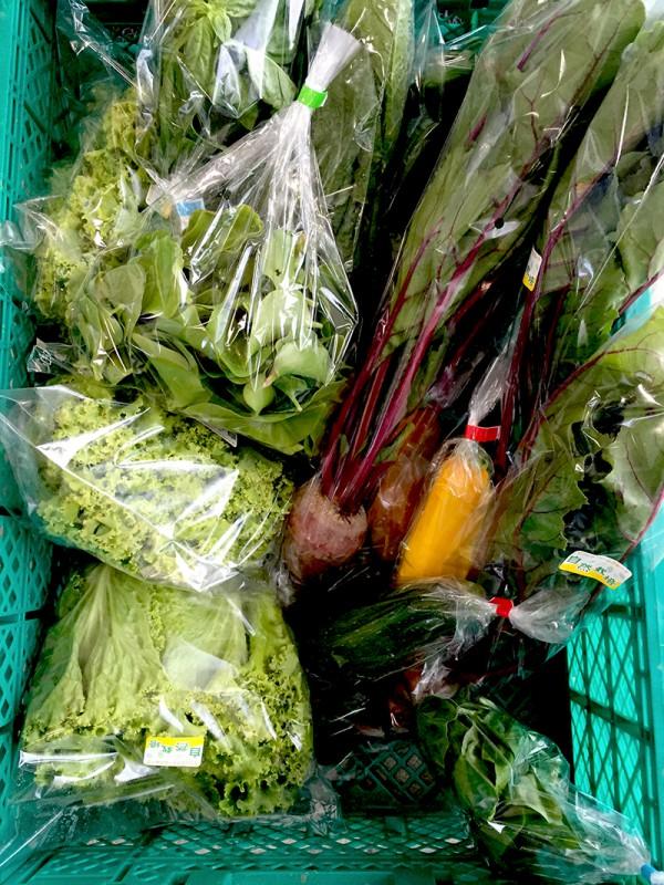 沖縄自然農野菜3